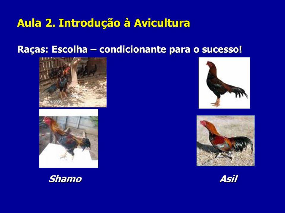Aula 2. Introdução à Avicultura Raças: Escolha – condicionante para o sucesso! Shamo Asil