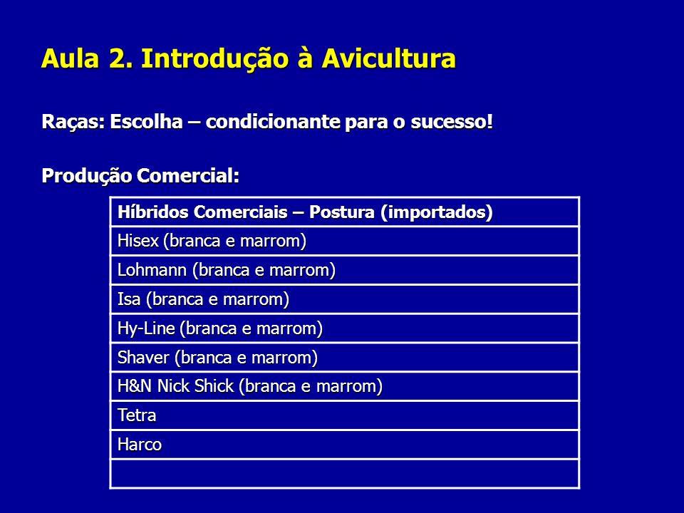 Aula 2. Introdução à Avicultura Raças: Escolha – condicionante para o sucesso! Produção Comercial: Híbridos Comerciais – Postura (importados) Hisex (b