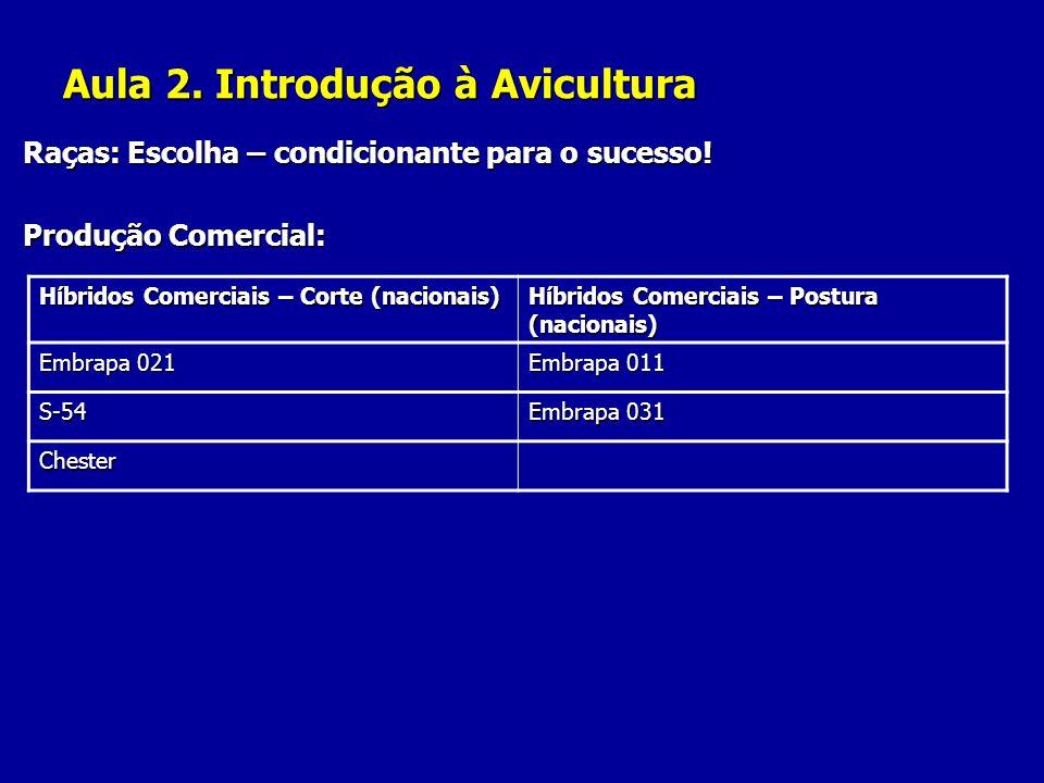 Aula 2. Introdução à Avicultura Raças: Escolha – condicionante para o sucesso! Produção Comercial: Híbridos Comerciais – Corte (nacionais) Híbridos Co