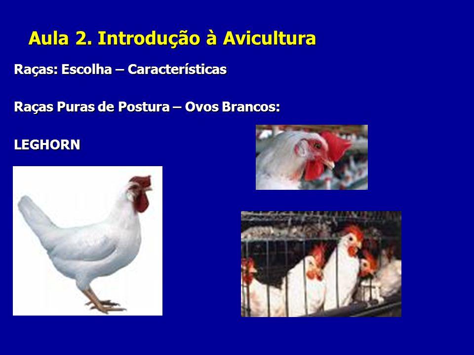 Aula 2. Introdução à Avicultura Raças: Escolha – Características Raças Puras de Postura – Ovos Brancos: LEGHORN