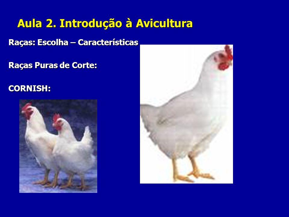 Aula 2. Introdução à Avicultura Raças: Escolha – Características Raças Puras de Corte: CORNISH: