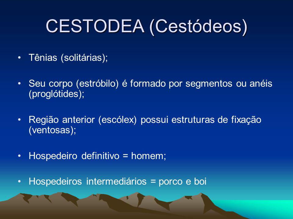 CESTODEA (Cestódeos) Tênias (solitárias); Seu corpo (estróbilo) é formado por segmentos ou anéis (proglótides); Região anterior (escólex) possui estruturas de fixação (ventosas); Hospedeiro definitivo = homem; Hospedeiros intermediários = porco e boi