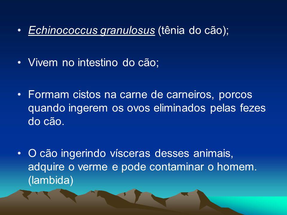 Echinococcus granulosus (tênia do cão); Vivem no intestino do cão; Formam cistos na carne de carneiros, porcos quando ingerem os ovos eliminados pelas fezes do cão.