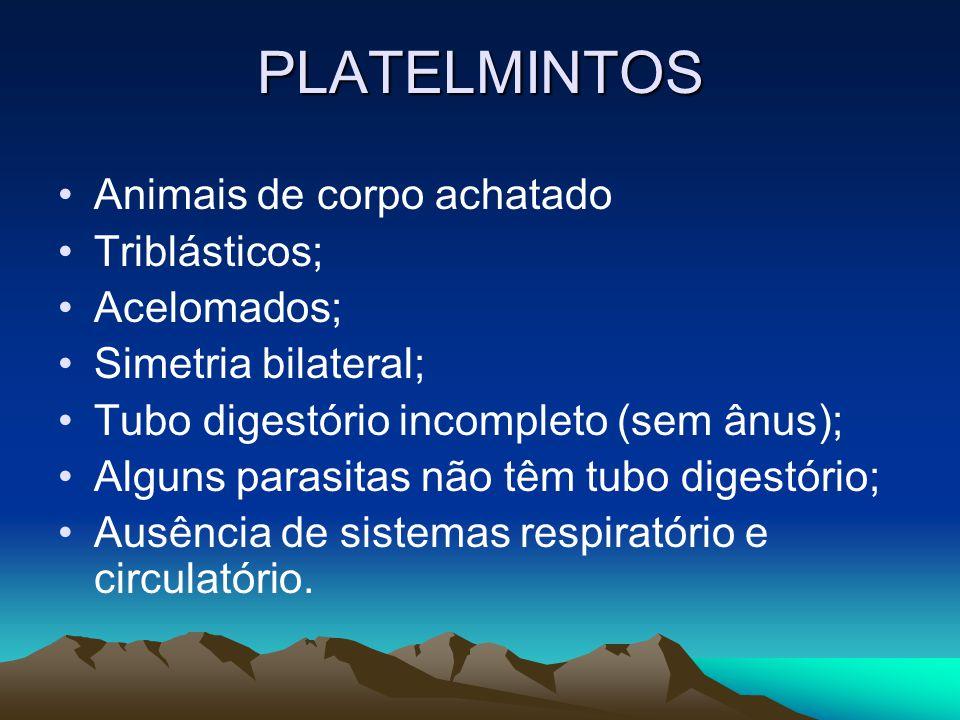 PLATELMINTOS Animais de corpo achatado Triblásticos; Acelomados; Simetria bilateral; Tubo digestório incompleto (sem ânus); Alguns parasitas não têm tubo digestório; Ausência de sistemas respiratório e circulatório.