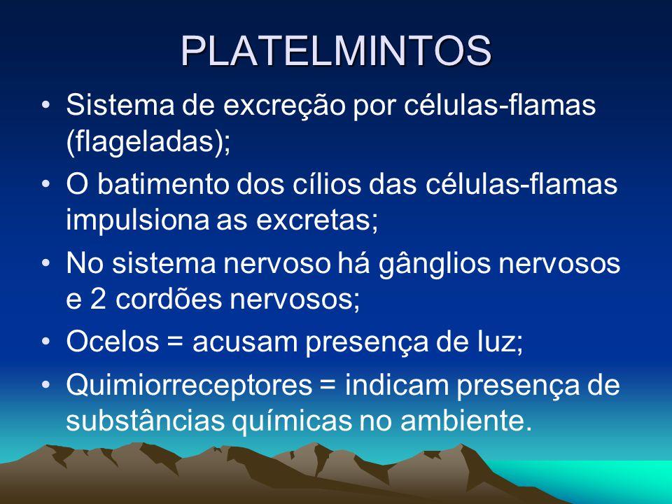 PLATELMINTOS: CLASSES TURBELLARIA [turbelários] planária TREMATODA [trematódeos] Schistosoma mansoni barriga-dágua CESTODEA [cestódeos] tênias