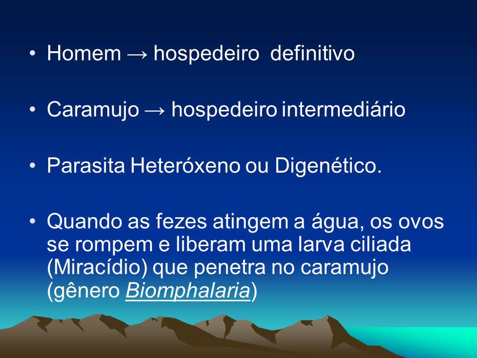 Homem hospedeiro definitivo Caramujo hospedeiro intermediário Parasita Heteróxeno ou Digenético.