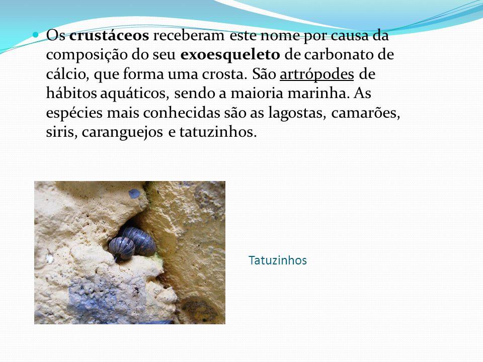 Tatuzinhos Os crustáceos receberam este nome por causa da composição do seu exoesqueleto de carbonato de cálcio, que forma uma crosta.
