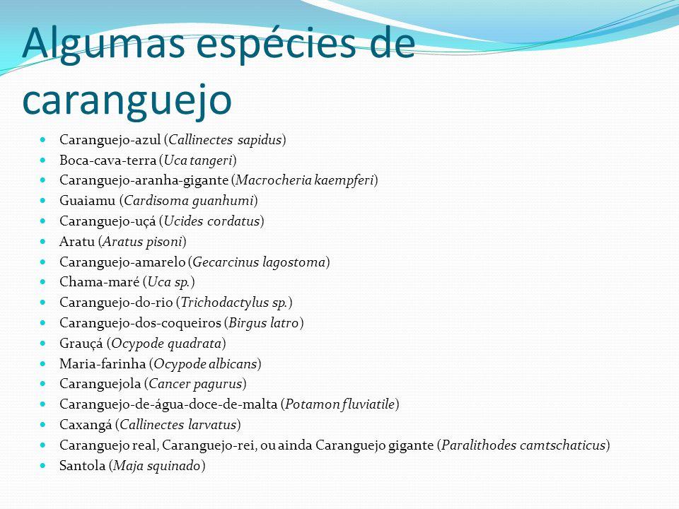 Algumas espécies de caranguejo Caranguejo-azul (Callinectes sapidus) Boca-cava-terra (Uca tangeri) Caranguejo-aranha-gigante (Macrocheria kaempferi) Guaiamu (Cardisoma guanhumi) Caranguejo-uçá (Ucides cordatus) Aratu (Aratus pisoni) Caranguejo-amarelo (Gecarcinus lagostoma) Chama-maré (Uca sp.) Caranguejo-do-rio (Trichodactylus sp.) Caranguejo-dos-coqueiros (Birgus latro) Grauçá (Ocypode quadrata) Maria-farinha (Ocypode albicans) Caranguejola (Cancer pagurus) Caranguejo-de-água-doce-de-malta (Potamon fluviatile) Caxangá (Callinectes larvatus) Caranguejo real, Caranguejo-rei, ou ainda Caranguejo gigante (Paralithodes camtschaticus) Santola (Maja squinado)