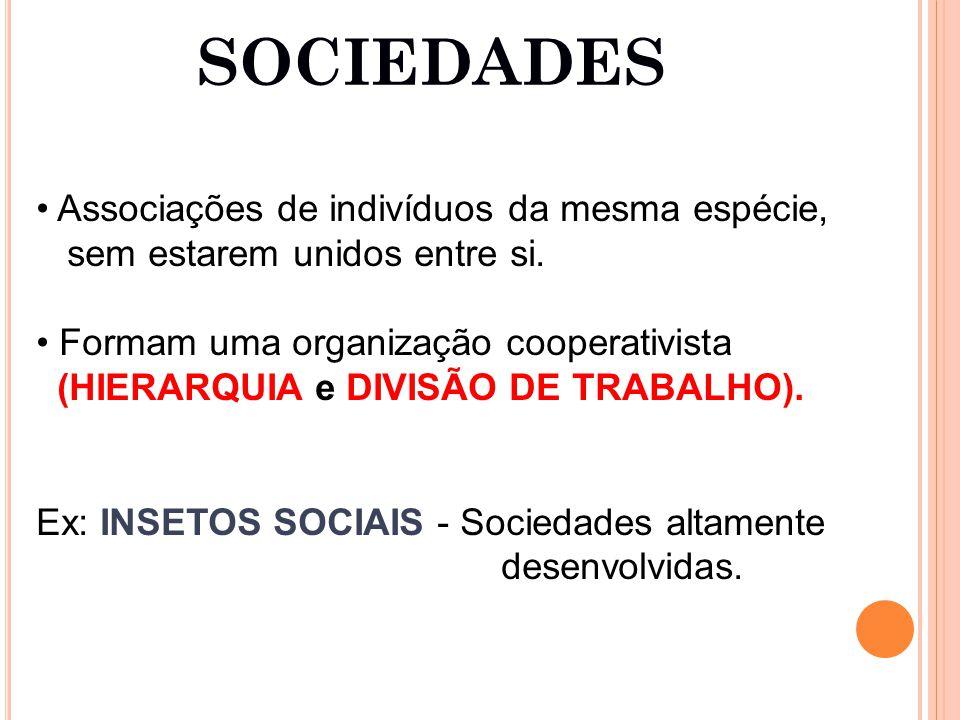 SOCIEDADES Associações de indivíduos da mesma espécie, sem estarem unidos entre si.