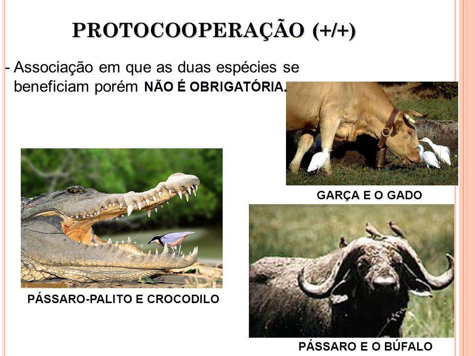 PROTOCOOPERAÇÃO (+/+) - Associação em que as duas espécies se beneficiam porém NÃO É OBRIGATÓRIA.
