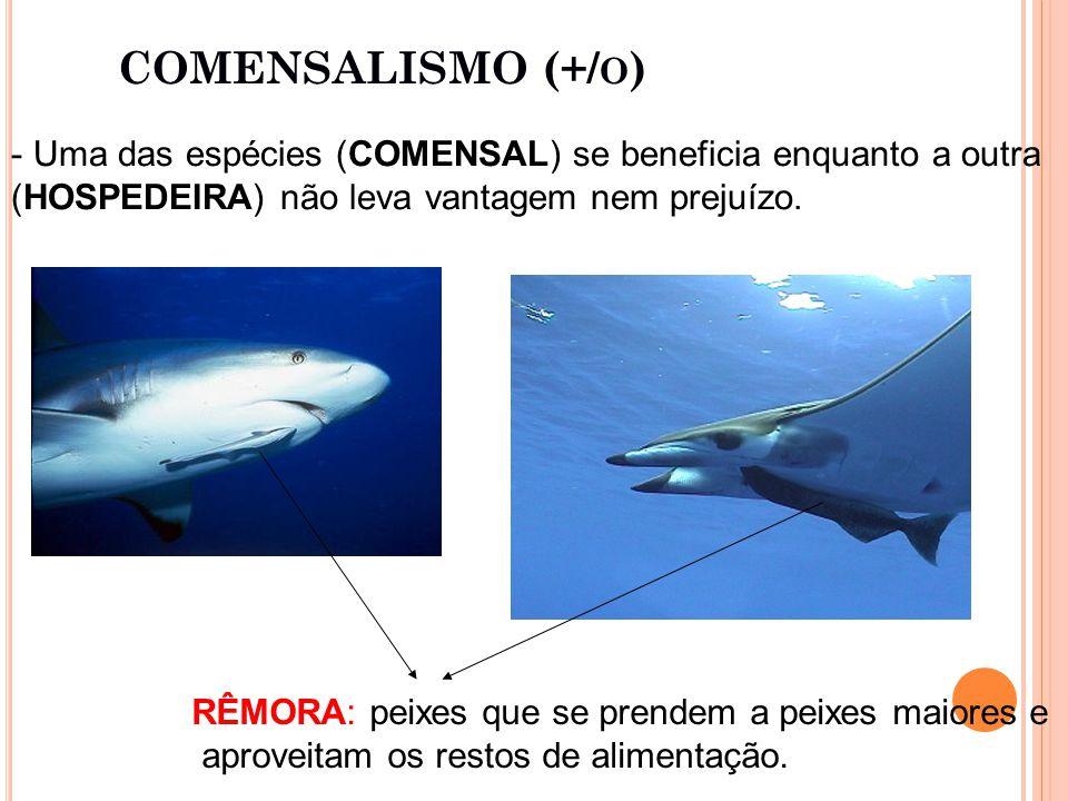 COMENSALISMO (+/ O ) - Uma das espécies (COMENSAL) se beneficia enquanto a outra (HOSPEDEIRA) não leva vantagem nem prejuízo.