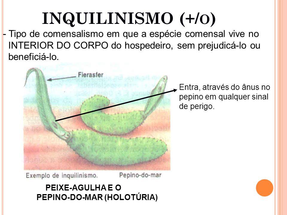 INQUILINISMO (+/ O ) - Tipo de comensalismo em que a espécie comensal vive no INTERIOR DO CORPO do hospedeiro, sem prejudicá-lo ou beneficiá-lo.