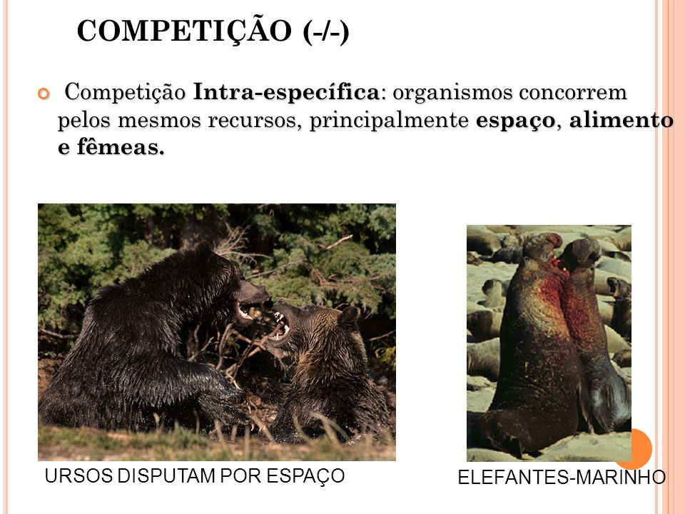 COMPETIÇÃO (-/-) Competição Intra-específica : organismos concorrem pelos mesmos recursos, principalmente espaço, alimento e fêmeas.