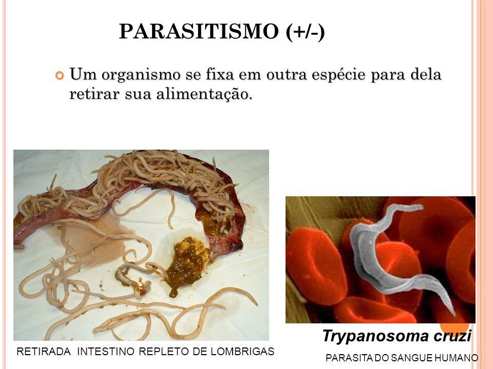 PARASITISMO (+/-) Um organismo se fixa em outra espécie para dela retirar sua alimentação.
