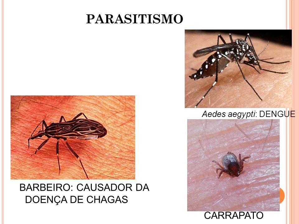 PARASITISMO BARBEIRO: CAUSADOR DA DOENÇA DE CHAGAS Aedes aegypti: DENGUE CARRAPATO