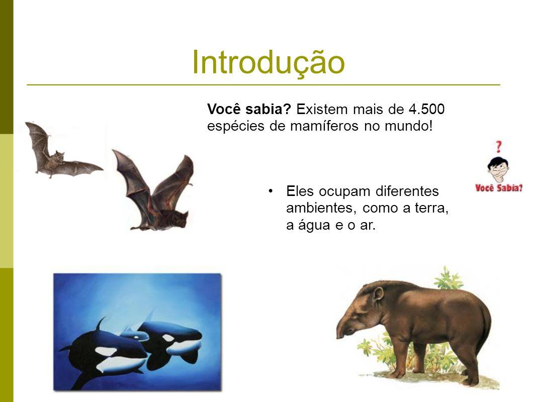 Introdução Eles ocupam diferentes ambientes, como a terra, a água e o ar. Você sabia? Existem mais de 4.500 espécies de mamíferos no mundo!
