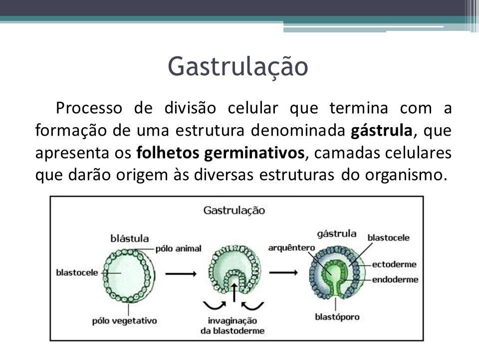 Gastrulação Processo de divisão celular que termina com a formação de uma estrutura denominada gástrula, que apresenta os folhetos germinativos, camad
