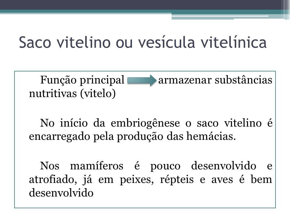 Saco vitelino ou vesícula vitelínica Função principal armazenar substâncias nutritivas (vitelo) No início da embriogênese o saco vitelino é encarregad