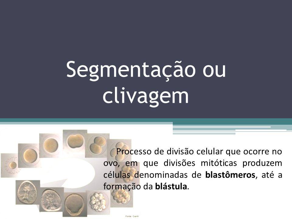 Segmentação ou clivagem Processo de divisão celular que ocorre no ovo, em que divisões mitóticas produzem células denominadas de blastômeros, até a fo