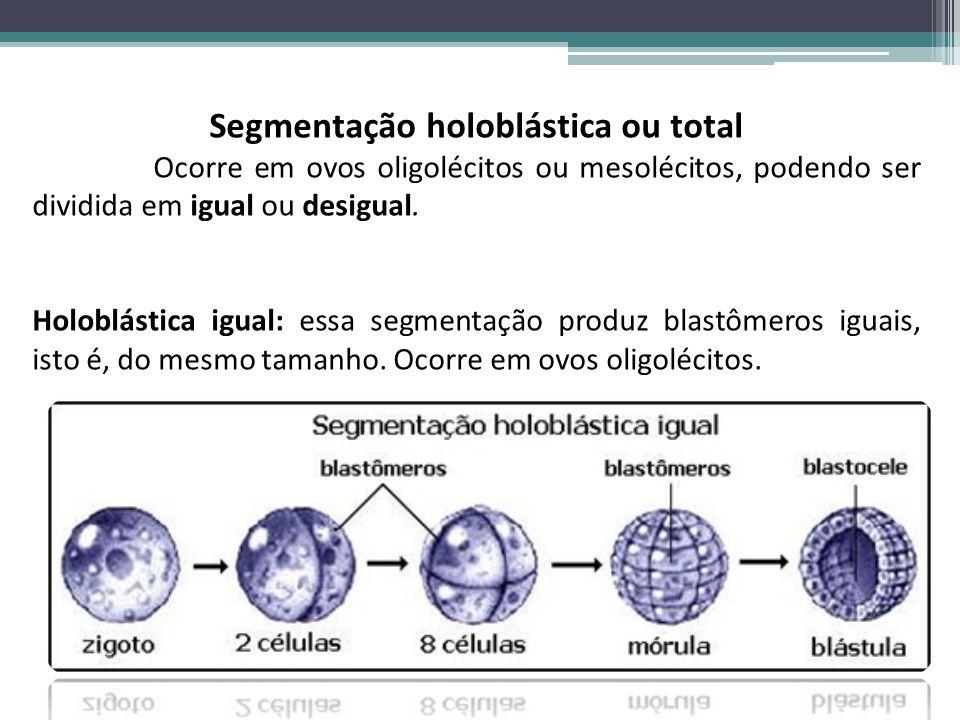 Segmentação holoblástica ou total Ocorre em ovos oligolécitos ou mesolécitos, podendo ser dividida em igual ou desigual. Holoblástica igual: essa segm