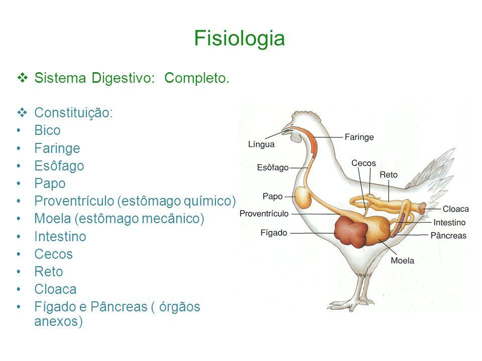 Fisiologia Sistema Digestivo: Completo.
