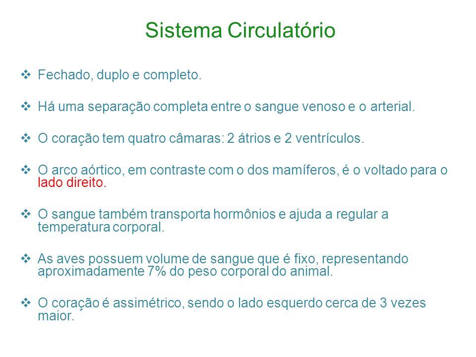Sistema Circulatório Fechado, duplo e completo.