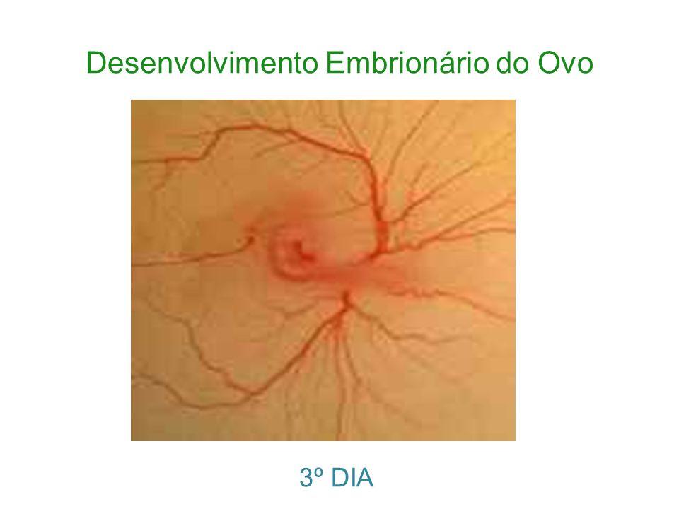 Desenvolvimento Embrionário do Ovo 3º DIA