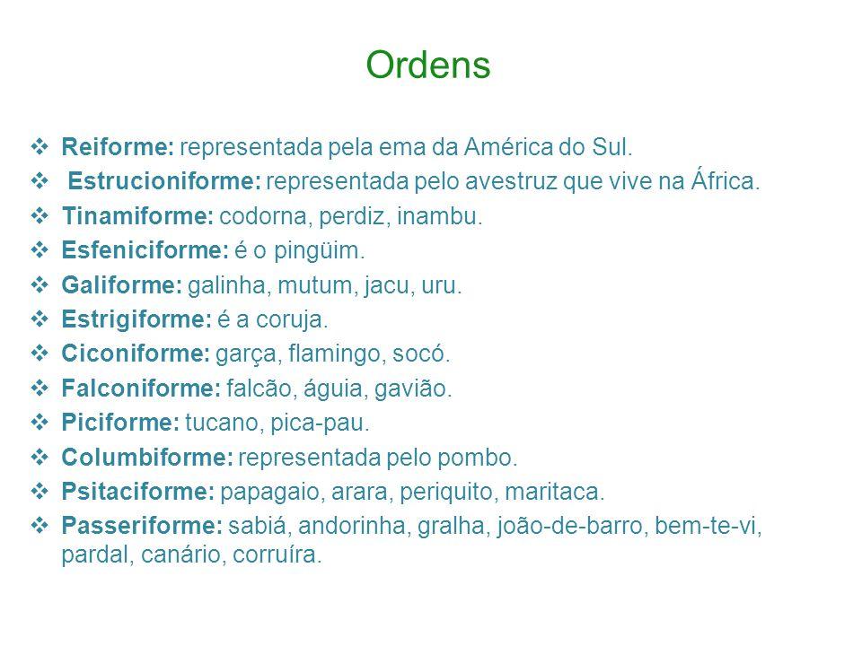 Ordens Reiforme: representada pela ema da América do Sul.