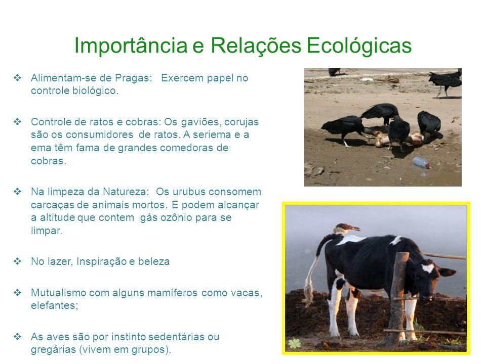 Importância e Relações Ecológicas Alimentam-se de Pragas: Exercem papel no controle biológico.
