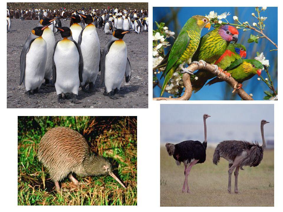 Suas fezes fertilizam o solo; Seus ovos e carne são fonte de proteínas; Ajudam a espalhar as sementes; Mutualismo com alguns mamíferos como vacas, elefantes; As aves são por instinto sedentárias ou gregárias (vivem em grupos).