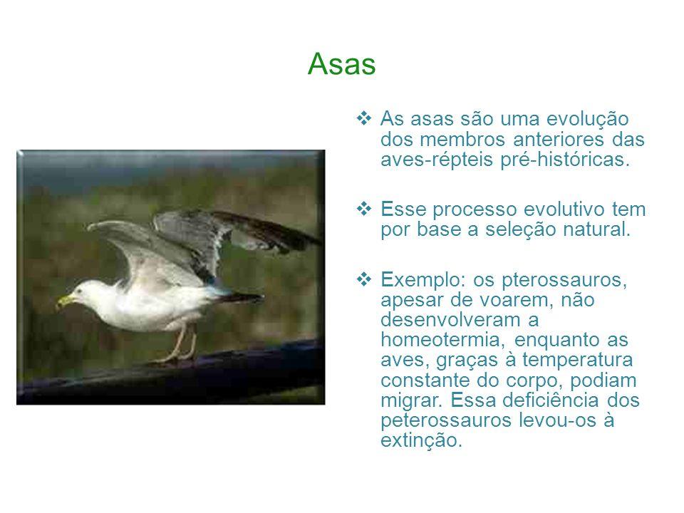 A Pata A pata da ave denuncia o lugar onde ela vive.