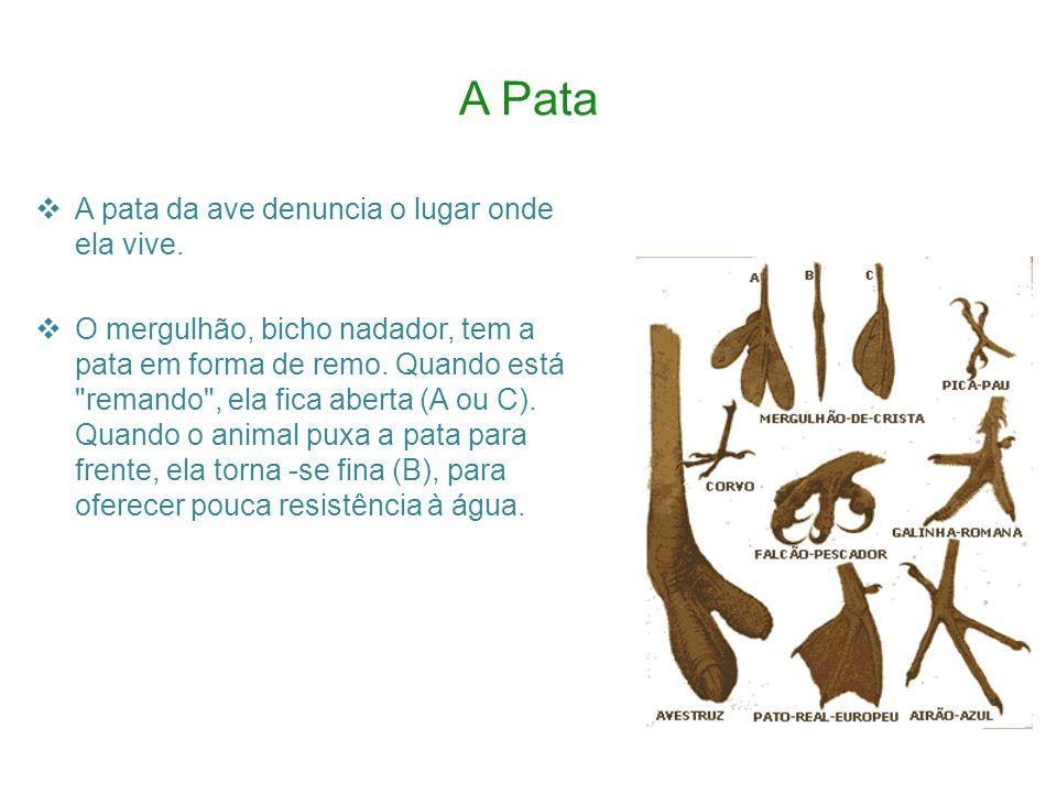 Penas e Plumas As plumas e penas são características próprias das aves, distinguindo-se de todos os outros animais.