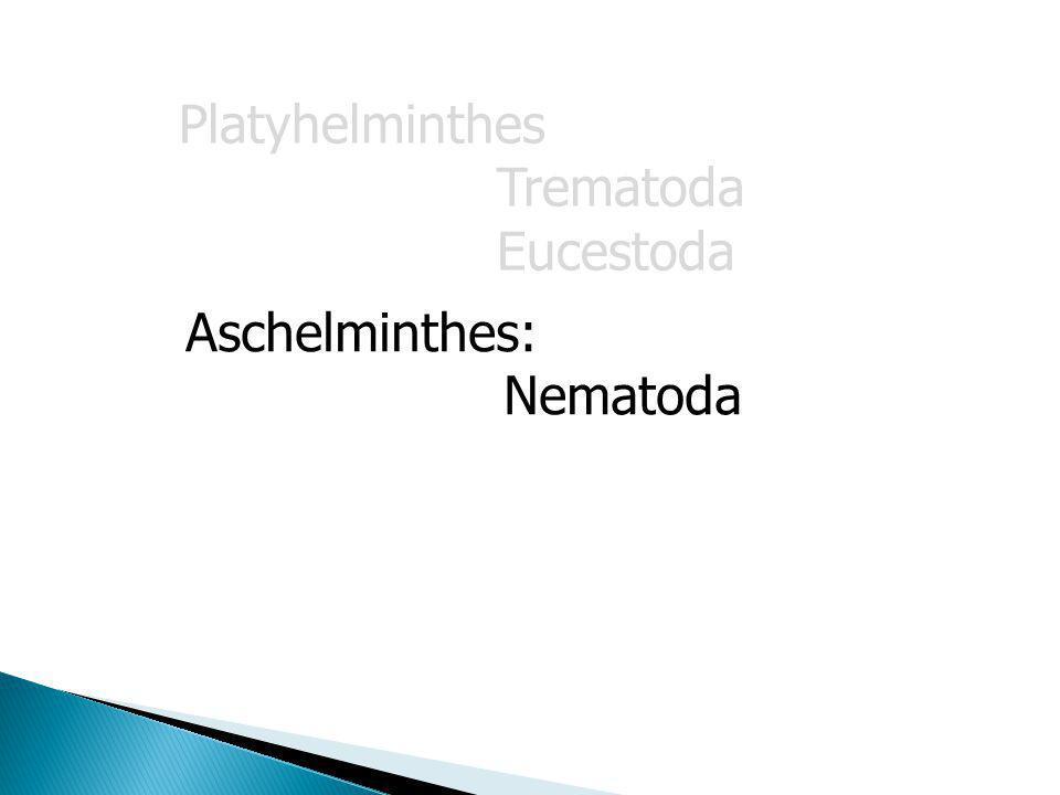 Aschelminthes: Nematoda Platyhelminthes Trematoda Eucestoda