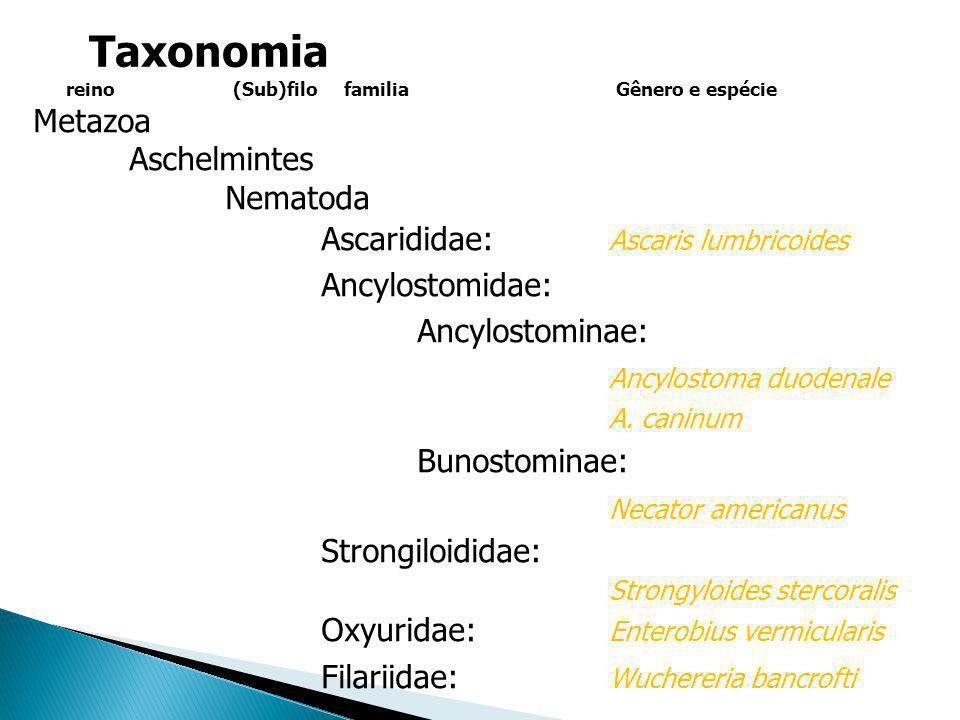 Metazoa Aschelmintes Nematoda Ascarididae: Ascaris lumbricoides Ancylostomidae: Ancylostominae: Ancylostoma duodenale A. caninum Bunostominae: Necator