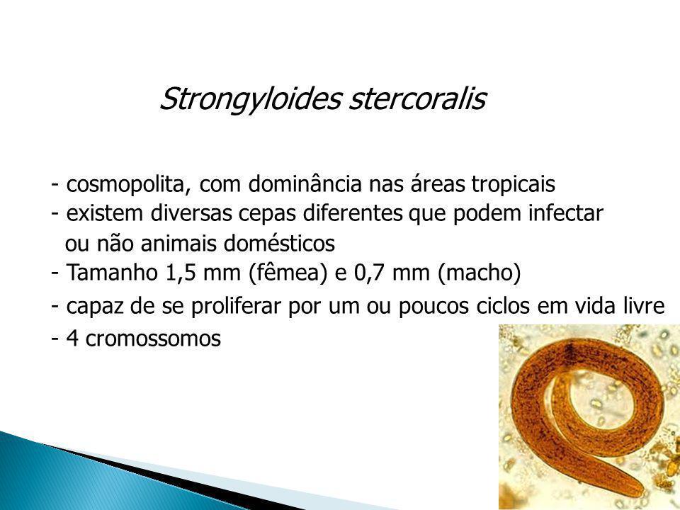 Strongyloides stercoralis - cosmopolita, com dominância nas áreas tropicais - existem diversas cepas diferentes que podem infectar ou não animais domé