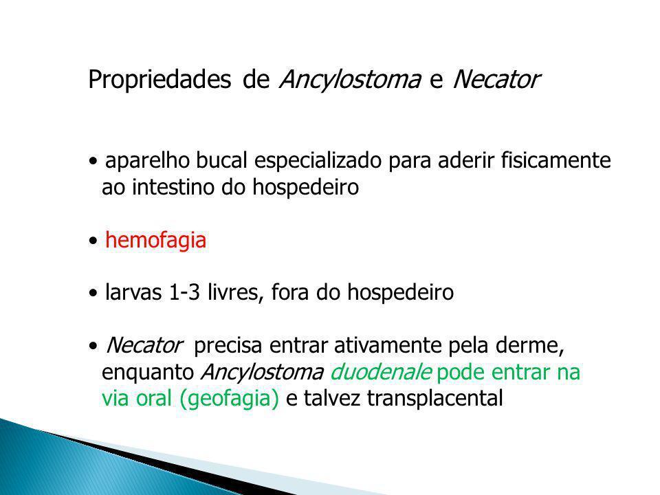 Propriedades de Ancylostoma e Necator aparelho bucal especializado para aderir fisicamente ao intestino do hospedeiro hemofagia larvas 1-3 livres, for