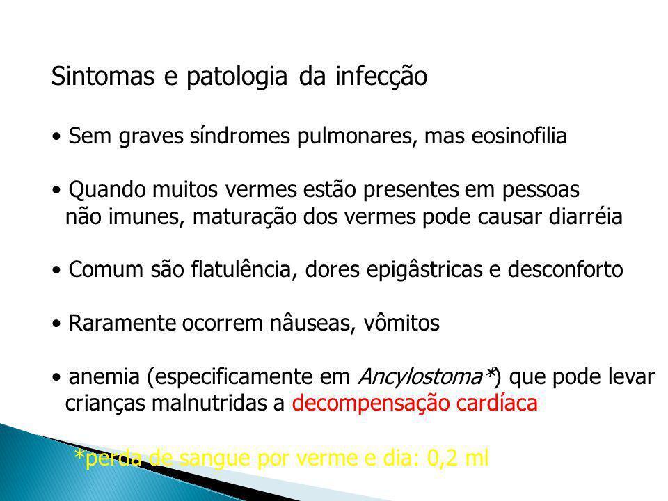 Sintomas e patologia da infecção Sem graves síndromes pulmonares, mas eosinofilia Quando muitos vermes estão presentes em pessoas não imunes, maturaçã