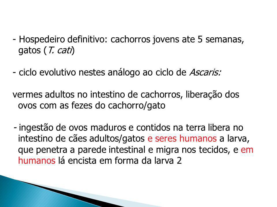 - Hospedeiro definitivo: cachorros jovens ate 5 semanas, gatos (T. cati) - ciclo evolutivo nestes análogo ao ciclo de Ascaris: vermes adultos no intes
