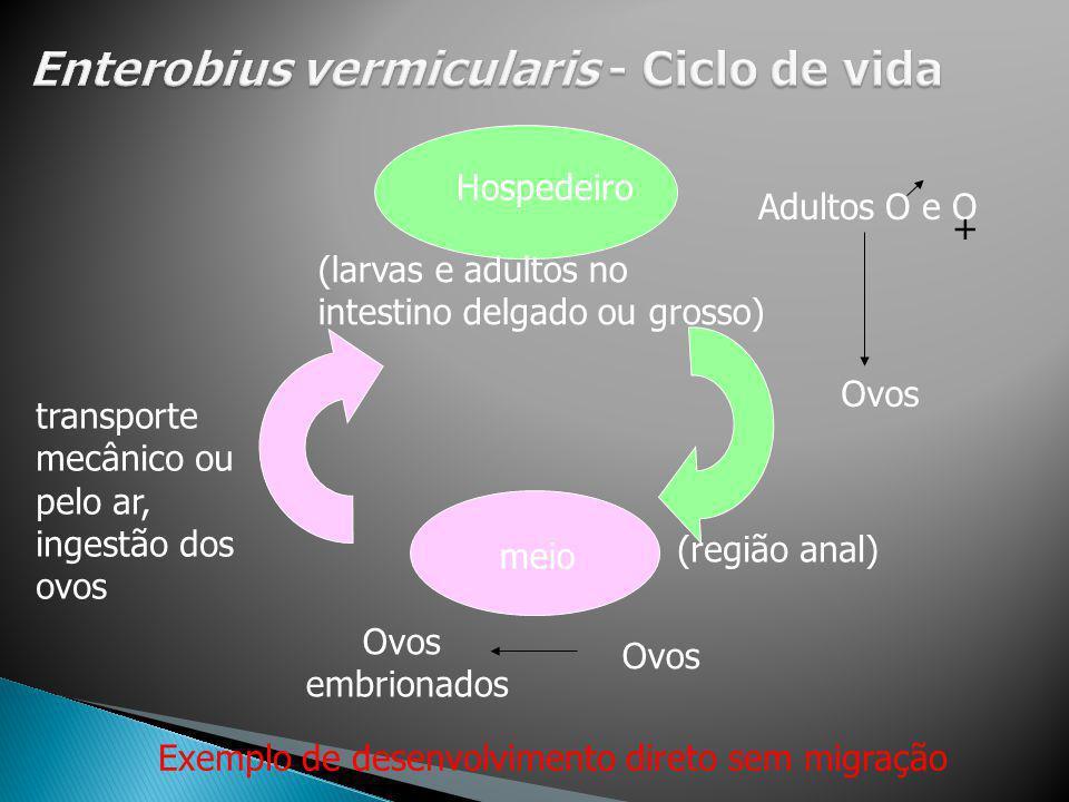 Hospedeiro Adultos O e O + meio Ovos embrionados Ovos transporte mecânico ou pelo ar, ingestão dos ovos (larvas e adultos no intestino delgado ou gros