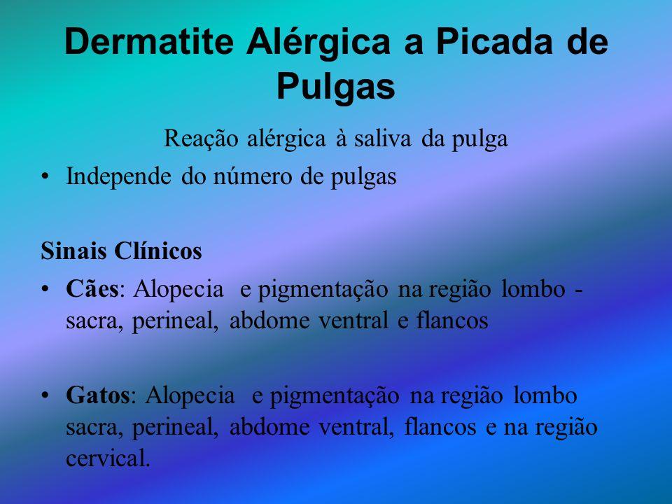 Dermatite Alérgica a Picada de Pulgas Reação alérgica à saliva da pulga Independe do número de pulgas Sinais Clínicos Cães: Alopecia e pigmentação na