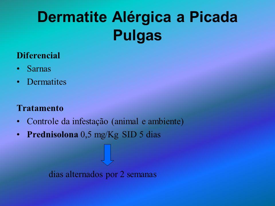 Dermatite Alérgica a Picada Pulgas Diferencial Sarnas Dermatites Tratamento Controle da infestação (animal e ambiente) Prednisolona 0,5 mg/Kg SID 5 di