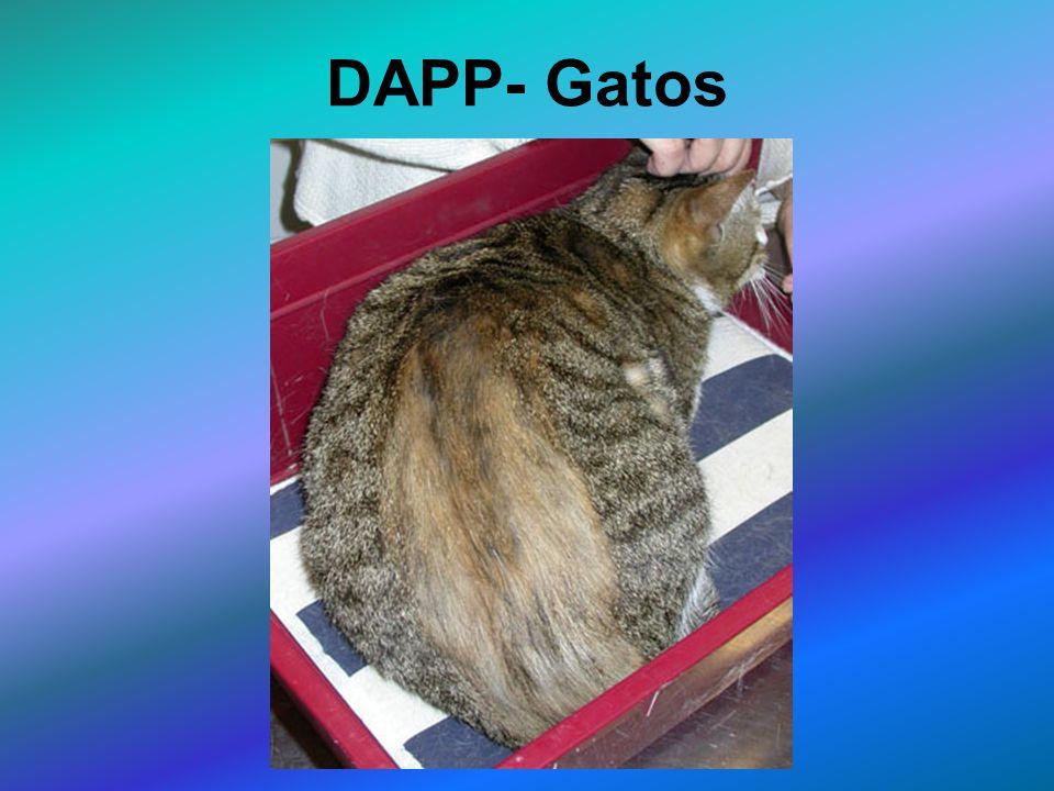 DAPP- Gatos
