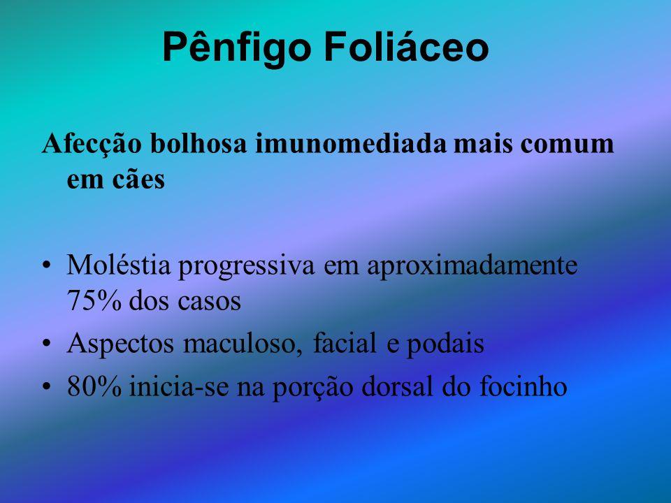 Pênfigo Foliáceo Afecção bolhosa imunomediada mais comum em cães Moléstia progressiva em aproximadamente 75% dos casos Aspectos maculoso, facial e pod