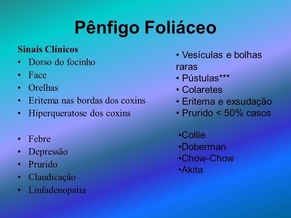 Pênfigo Foliáceo Sinais Clínicos Dorso do focinho Face Orelhas Eritema nas bordas dos coxins Hiperqueratose dos coxins Febre Depressão Prurido Claudic