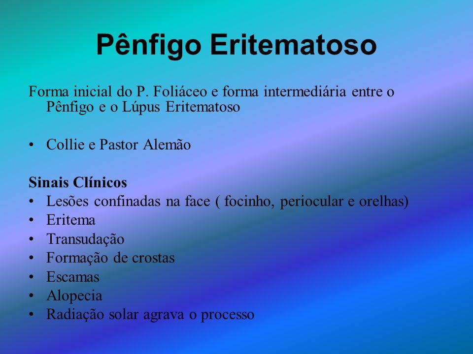 Pênfigo Eritematoso Forma inicial do P. Foliáceo e forma intermediária entre o Pênfigo e o Lúpus Eritematoso Collie e Pastor Alemão Sinais Clínicos Le