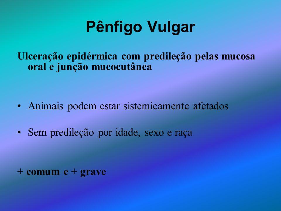 Pênfigo Vulgar Ulceração epidérmica com predileção pelas mucosa oral e junção mucocutânea Animais podem estar sistemicamente afetados Sem predileção p