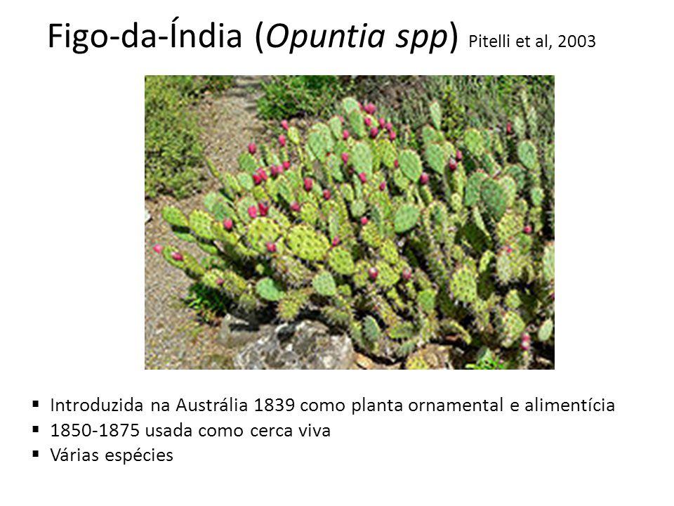 Figo-da-Índia (Opuntia spp) Pitelli et al, 2003 Introduzida na Austrália 1839 como planta ornamental e alimentícia 1850-1875 usada como cerca viva Vár