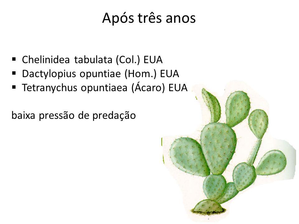 Chelinidea tabulata (Col.) EUA Dactylopius opuntiae (Hom.) EUA Tetranychus opuntiaea (Ácaro) EUA baixa pressão de predação Após três anos