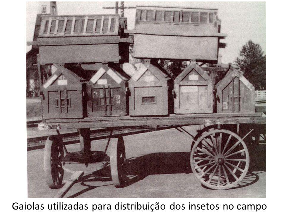 Gaiolas utilizadas para distribuição dos insetos no campo