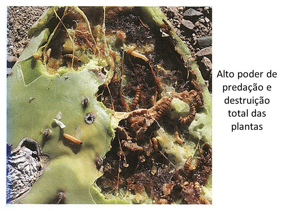 Alto poder de predação e destruição total das plantas
